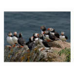 Puffin Convention Postcard