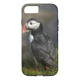 Puffin (Fratercula arctica), Staffa, off Isle of iPhone 8/7 Case