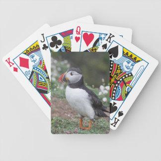 Puffin from Skomer Island Poker Deck