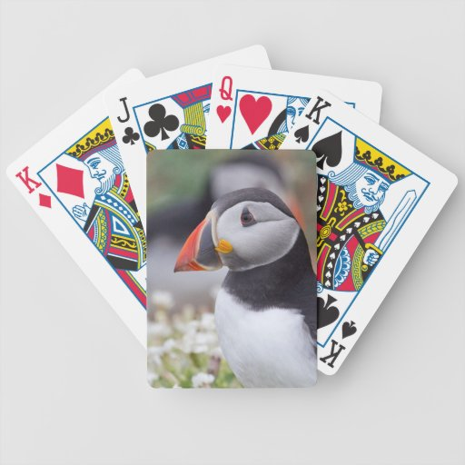 Puffin from Skomer Playing Cards