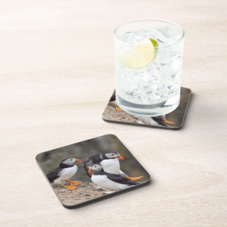Puffin Group Coaster
