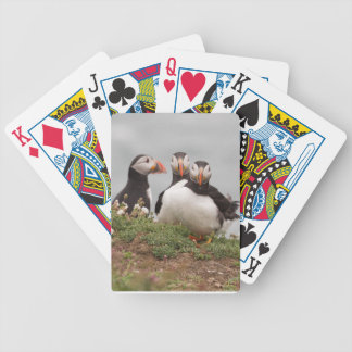 Puffin Group Poker Cards