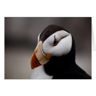 Puffin Horned 9028 Card