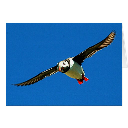 Puffin in Flight Cards
