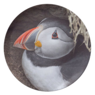 Puffin in the Burrow Plate