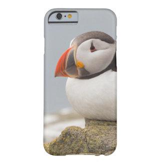 Puffin iPhone case
