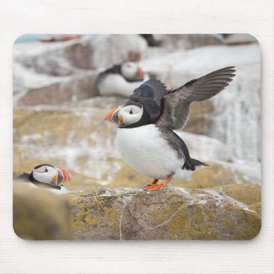 Puffin Ready To Take Off Mouse Mat