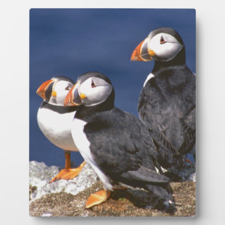 Puffin-tastic Display Plaque