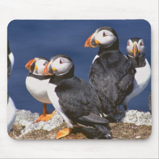 Puffin-tastic Mouse Mat