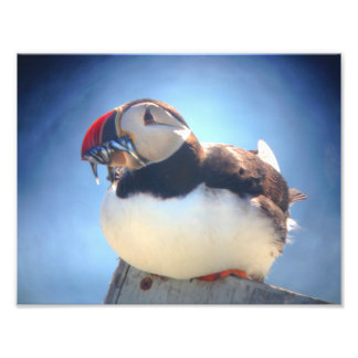Puffin with Fish Wall Print Photo Print