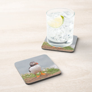 Puffin with flowers in Background Coaster