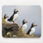 Puffins Mouse Pads