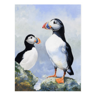 Puffins Post Card