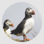 Puffins Stickers