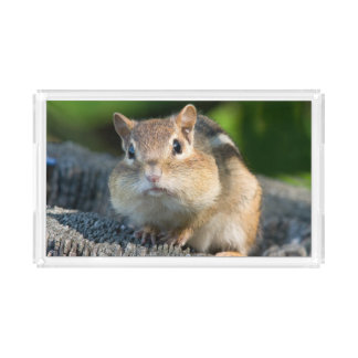 Puffy Cheeked Chipmunk Acrylic Tray
