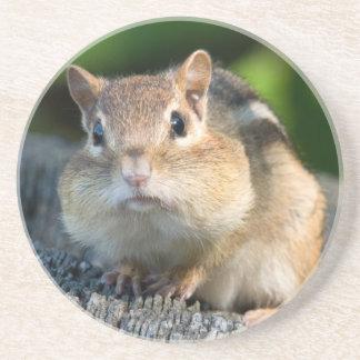 Puffy Cheeked Chipmunk Coaster