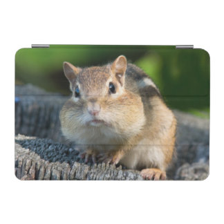 Puffy Cheeked Chipmunk iPad Mini Cover