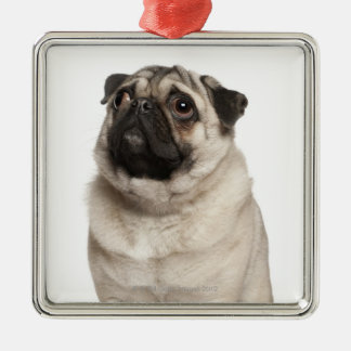 Pug (13 months old) looking up christmas ornament