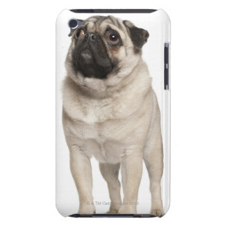 Pug (13 months old) looking up iPod touch cases
