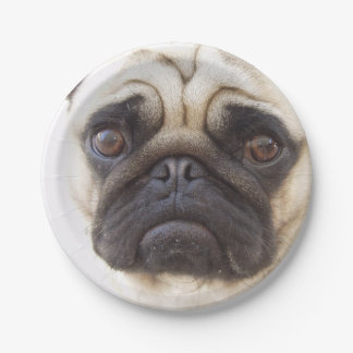 pug-7 paper plate