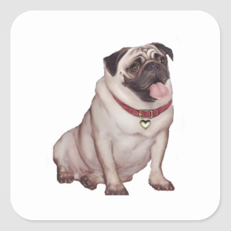 Pug (A) - fawn with red collar Square Sticker