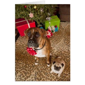 Pug and boxer sitting in front of Christmas tree Greeting Card