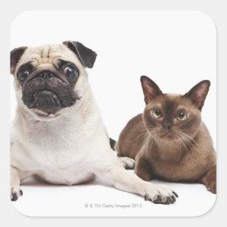 Pug and Burmese cat Square Sticker