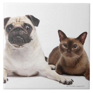 Pug and Burmese cat Tile