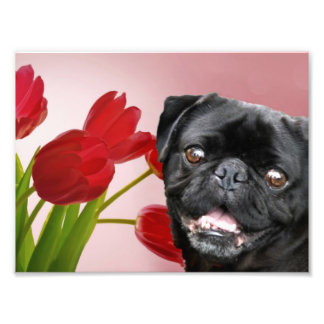 Pug and Tulips Photo Print