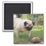 Pug and Turtle Meeting - Customise Fridge Magnets