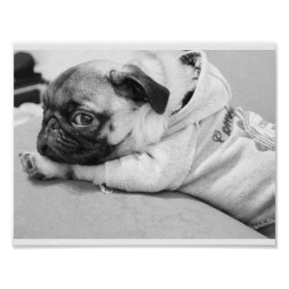 pug baby poster
