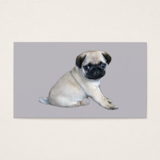 Pug Breeder Business Card