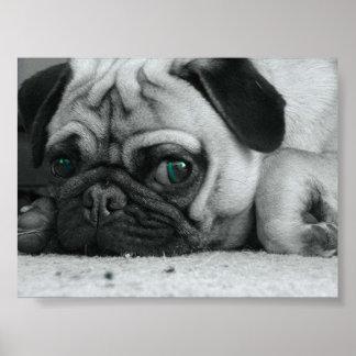 "Pug ""Breena"" Poster"