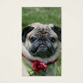 Pug business cards