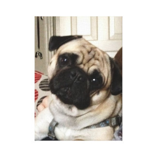 Pug Canvas Gallery Wrapped Canvas