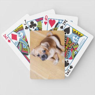 Pug Cross Cavalier King Charles Spaniel Bicycle Playing Cards