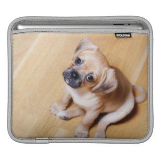 Pug Cross Cavalier King Charles Spaniel iPad Sleeve