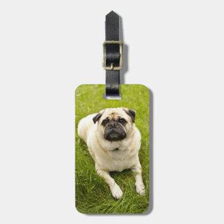 Pug cute dog beautiful photo custom gift luggage tag