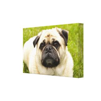 Pug cute dog beautiful photo wrapped canvas, gift canvas print