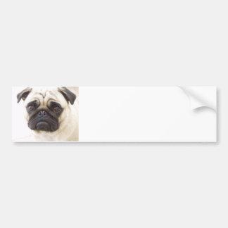 Pug Dog Bumper Sticker  Bumper Sticker
