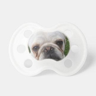 Pug dog dummy