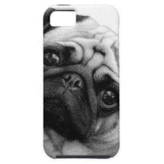 Pug Dog iPhone 5 Covers
