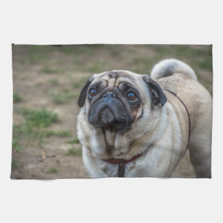 Pug dog kitchen towel