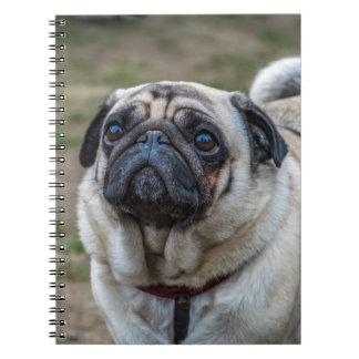Pug dog notebook