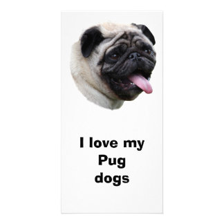Pug dog pet photo portrait photo greeting card