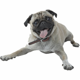 Pug Dog Photo Cutouts