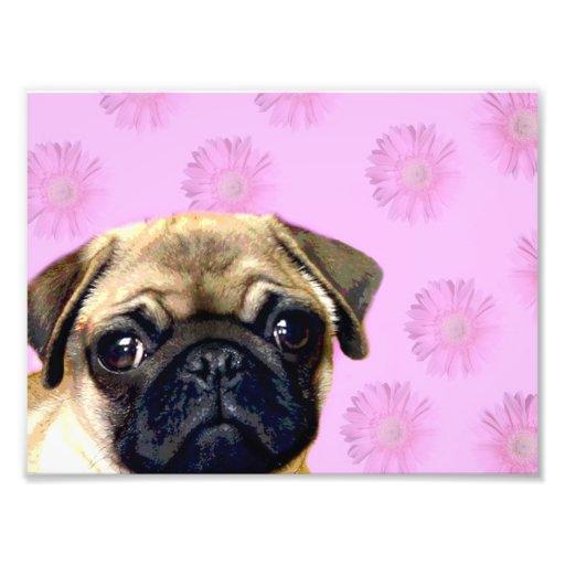 Pug dog photo