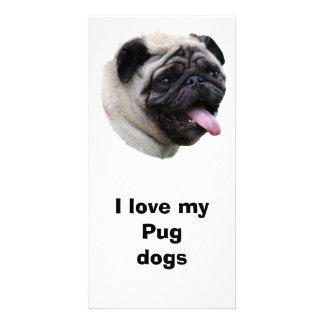 Pug dog photo portrait photo greeting card
