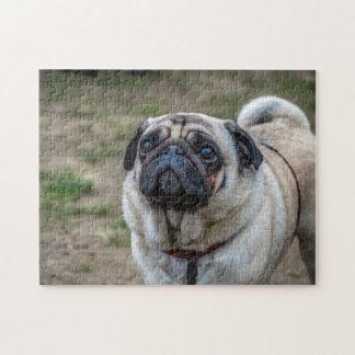 Pug dog photo puzzle