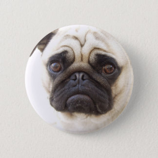 Pug Dog Round Button